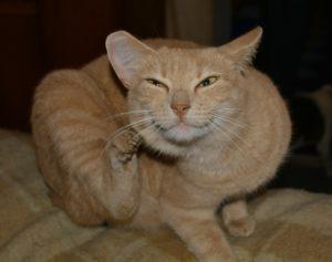 cat-227941_1280