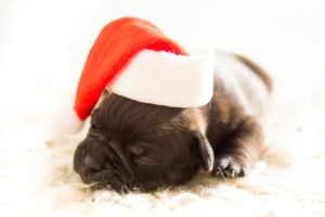 puppy-583415_1280