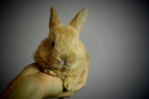 rabbit-373690_1280