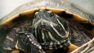 turtle-641462_1280