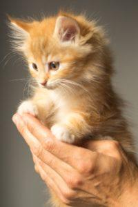 kitten-943275_1920 Neuter