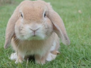 a small rabbit that may need vaccinations