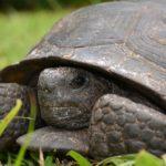 turtle-983128_1920