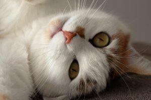 cat-1750215_1920