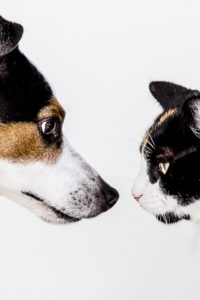 cat and dog looking at each other Healthy Pets Plan