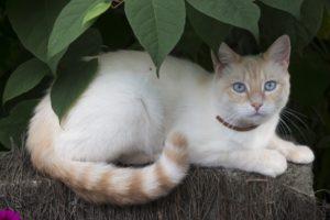 cat hiding in tree