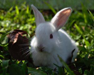 bunny in grass cute