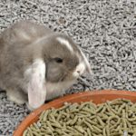 rabbit eating pellets