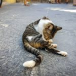 cat grooming 4
