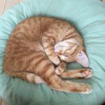 cat in cosy bed 2