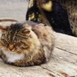 old cat 2