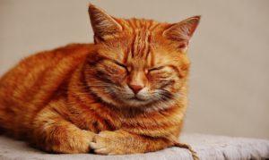 old cat 3