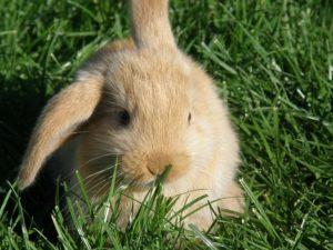 rabbit-2531800_640