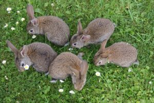rabbits-2140440_640
