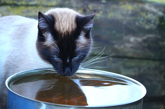 cat drinking from a bowl in a facilities